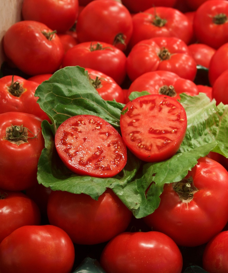 calidad industria alimentaria
