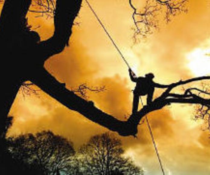 Gestion Arborea: Qué hacemos de Arbotek