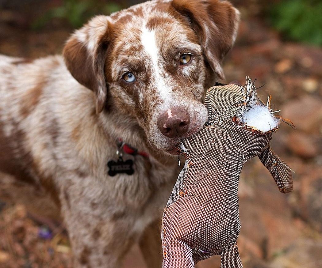 Juguetes para perros: consejos sobre seguridad