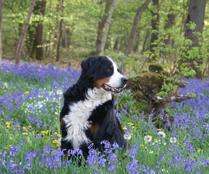 Consejos de cara a la primavera para nuestras mascotas