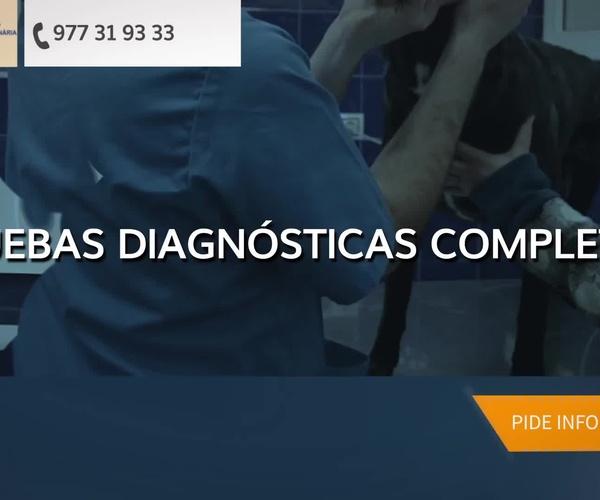 Urgencias veterinarias en Tarragona   Clínica Veterinaria Reus