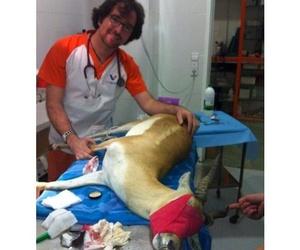 Todos los productos y servicios de Veterinarios: Clinica Veterinaria Tot Exotics Zoolandia
