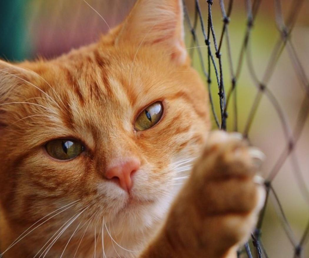 Consejos para que tu gato use el rascador