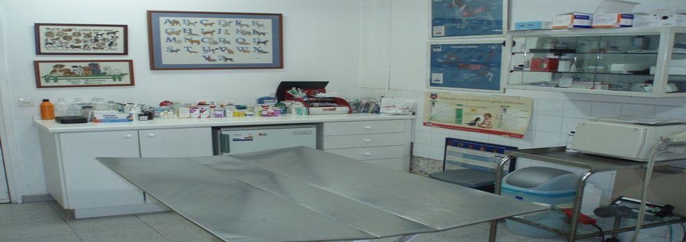 Veterinarios   en Arenys de Mar   Centre Veterinari Panda