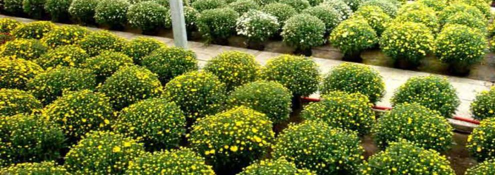Viveros agrícolas y forestales en Cieza | Viveros Proviplan