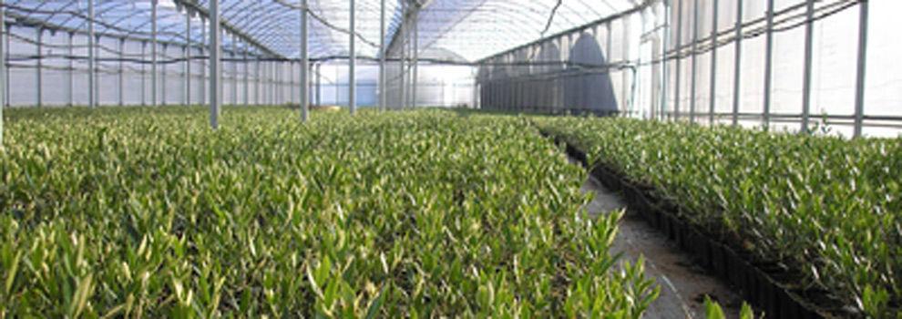 Florister as en oviedo viveros fern ndez for Viveros en asturias