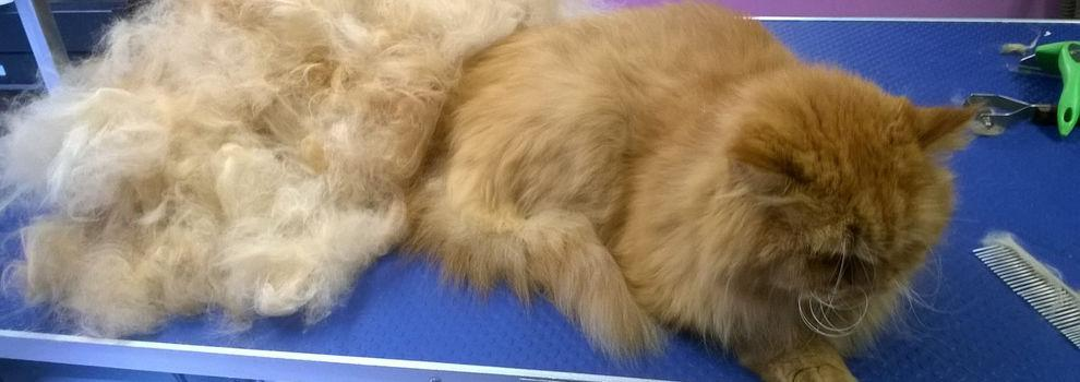 Pienso natural para perros en Nou Barris, Barcelona - Malaspulgas