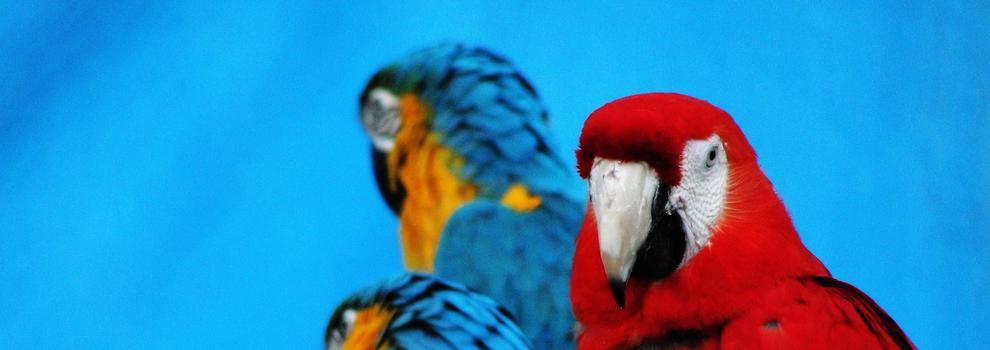 Venta de productos veterinarios en Alicante | Clínica Veterinaria La Almajada