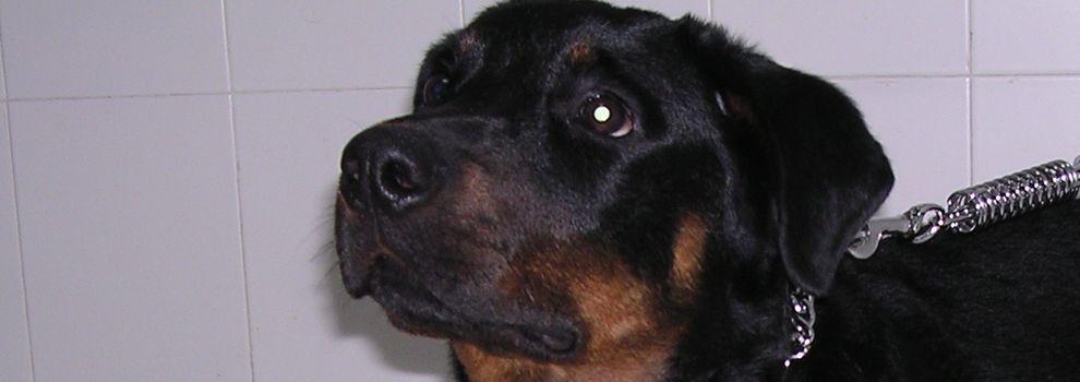 Urgencias veterinarias en Hortaleza | Argos Centro Veterinario