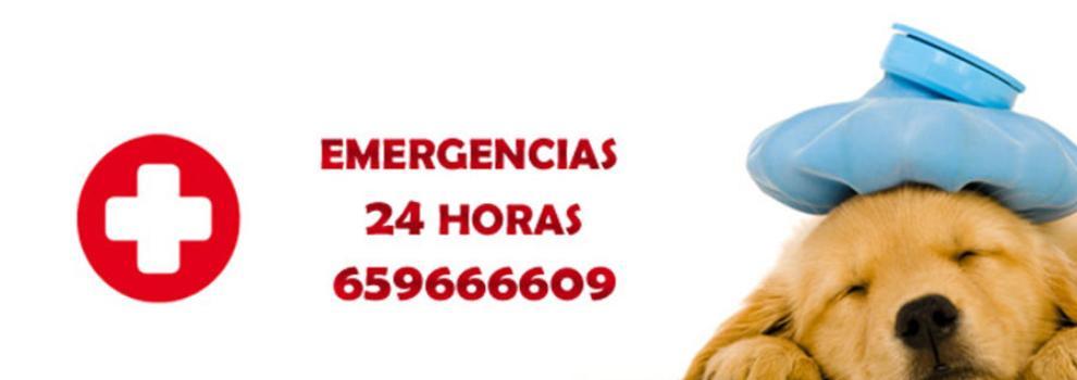 Veterinarios en San Vicente del Raspeig | Clínica Veterinaria Sol y Luz