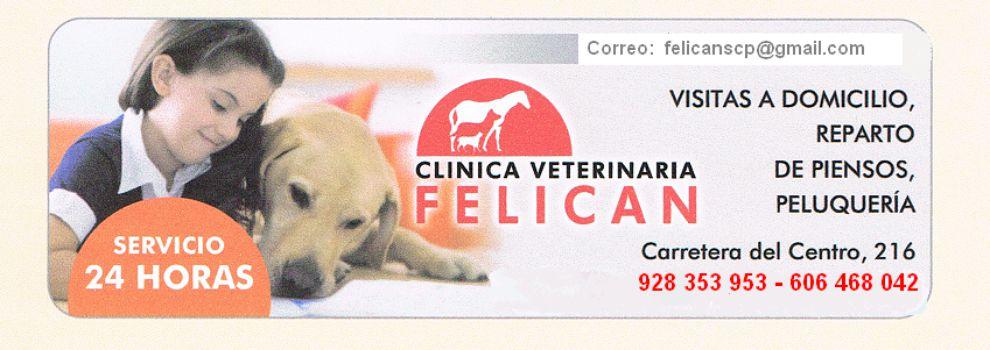 Urgencias veterinarias en Las Palmas de Gran Canaria | Hospital Veterinario Felicán