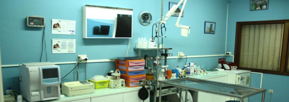 Veterinarios en Ames | Clínica Hospican