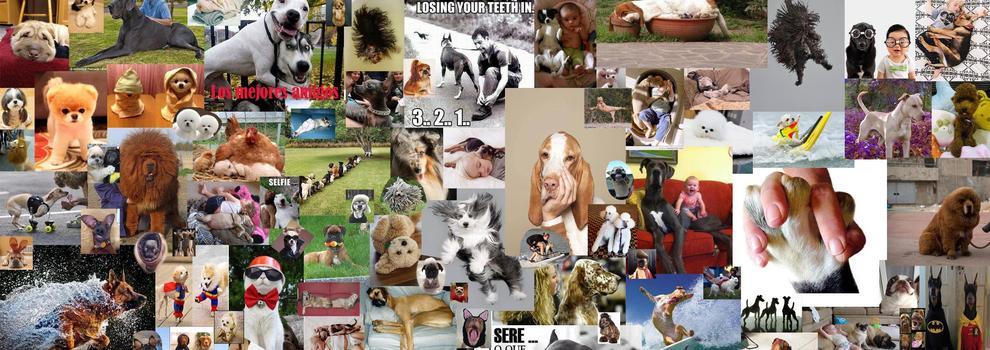 Artículos para perros en Sevilla | Peluquerñia Canina El Sevillano