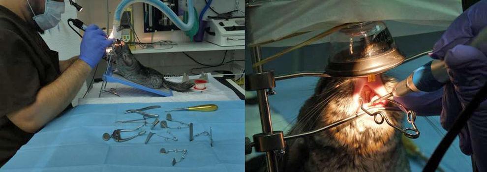 Hospital veterinario en Valencia