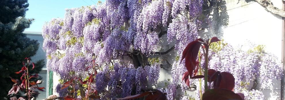Empresas de jardiner a en pamplona jardiner i el campillo for Empresas de jardineria
