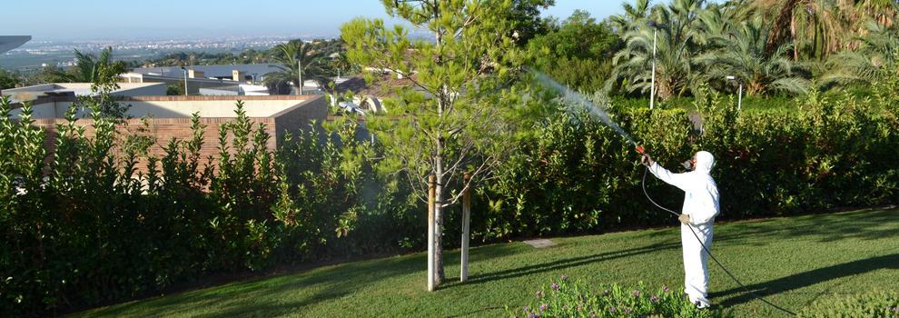 Empresas de jardiner a en valencia for Empresas de jardineria