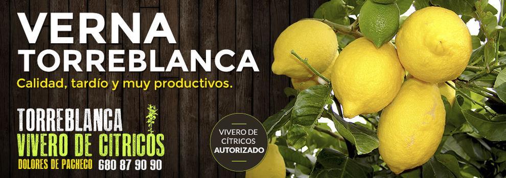 Viveros limoneros en Alicante | Torre Blanca Viveros