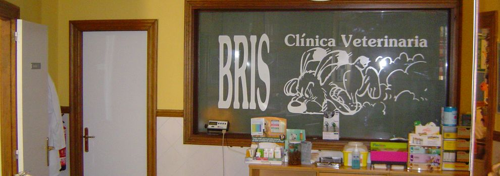 Veterinary surgeons in Bilbao | Bris Clínica Veterinaria