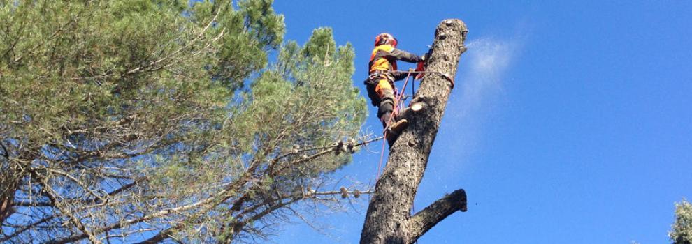 Poda en altura en Madrid oeste | T.D.A. Podas en Altura de la Cruz