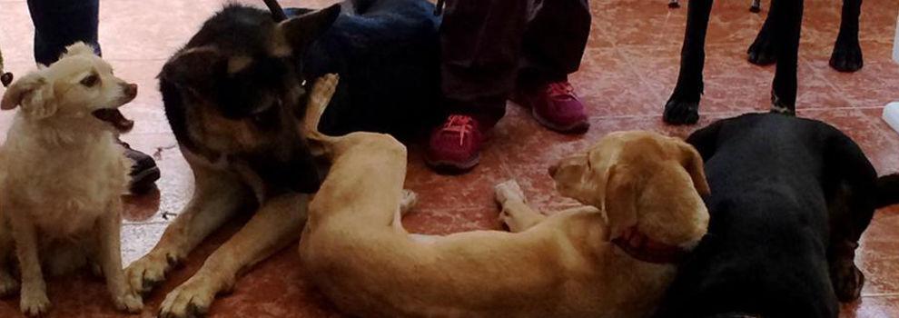 Urgencias veterinarias 24 horas en Valencia | Clínica Veterinaria Silla