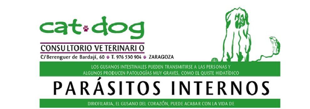 Veterinarios en Zaragoza | Clínica Veterinaria Cat-Dog