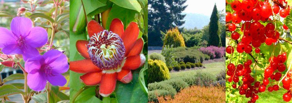 Viveros de plantas ornamentales en Oviedo | Viveros del Sueve