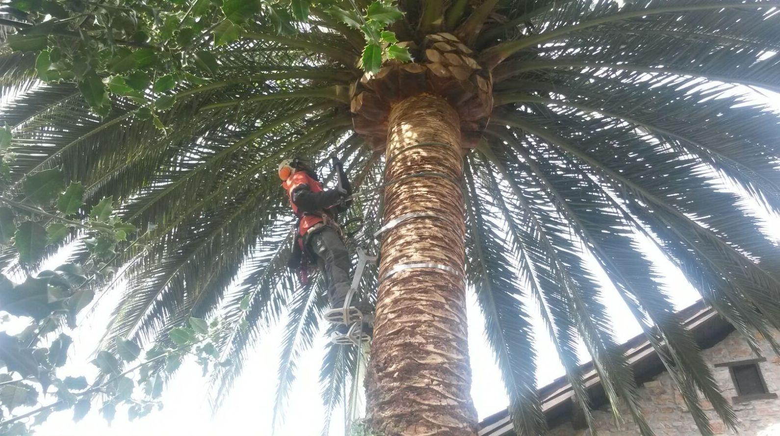 Servicios de poda de palmeras