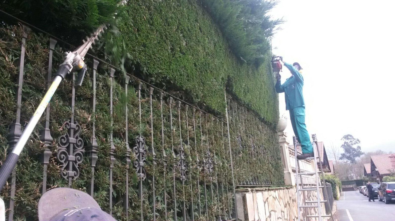 Conservación de jardines. Servicio de poda