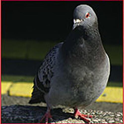 Control de Aves Las Palmas