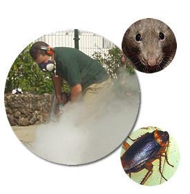 Control integral de plagas
