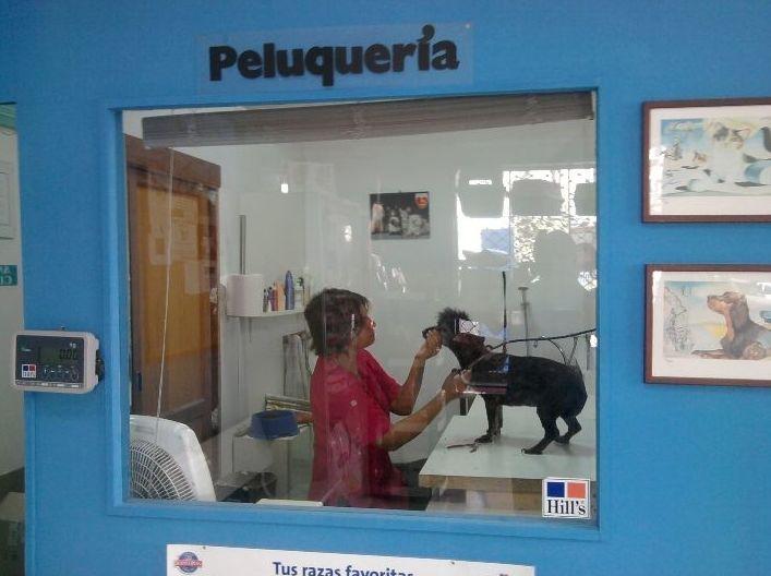 Foto 6 de Veterinarios en Arrecife | Clínica Veterinaria Jameos