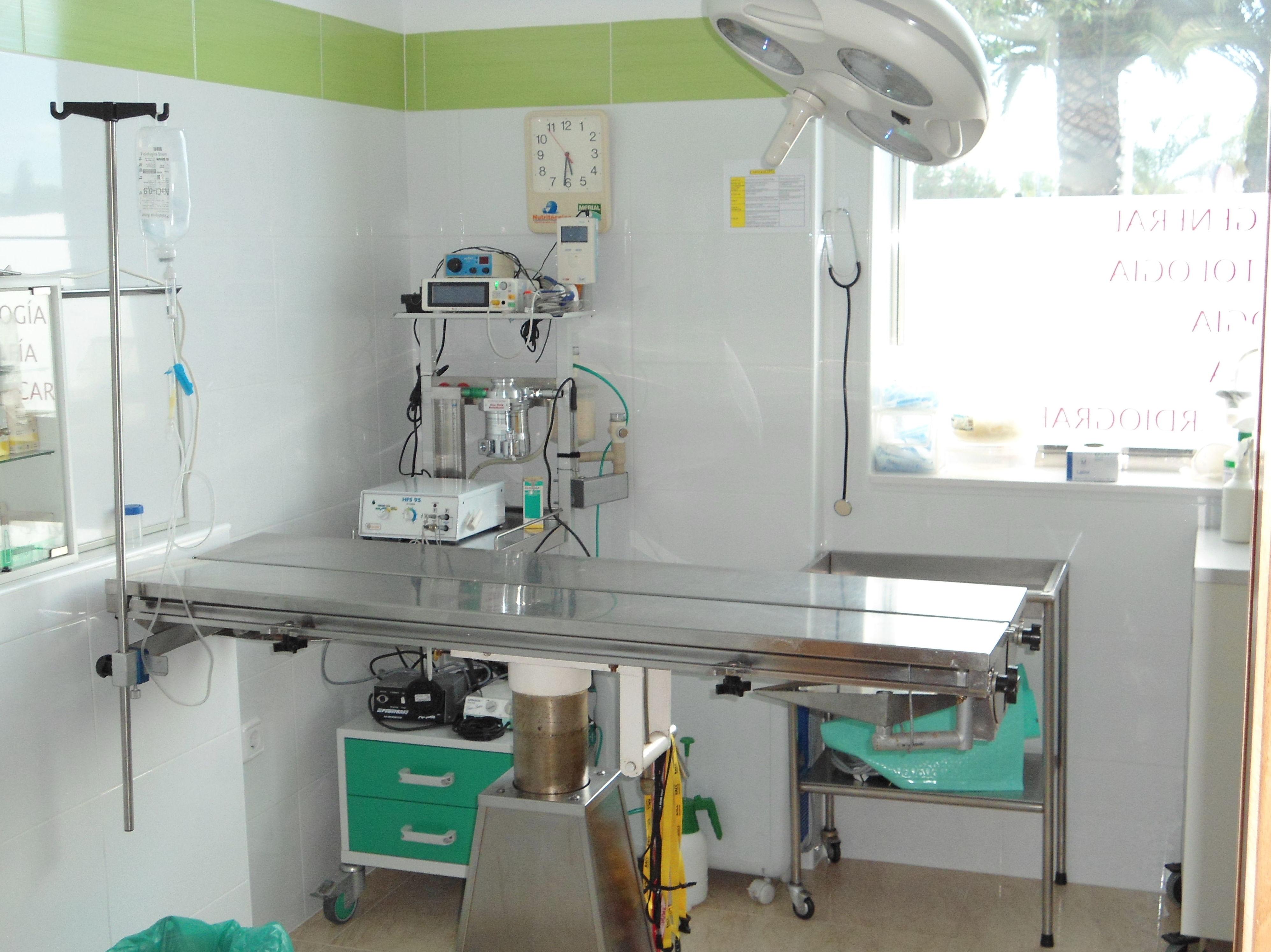 Foto 4 de Veterinarios en El Palmar   Cliper's Clínica Veterinaria