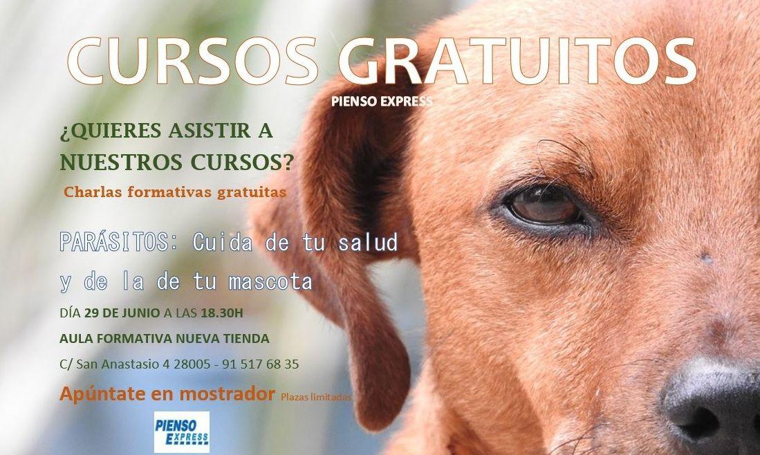 Curso gratuito mascotas parásitos