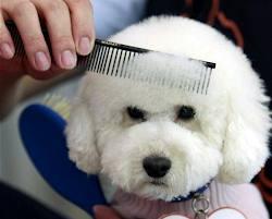 Peluquería canina: Nuestros productos de Pienso Express