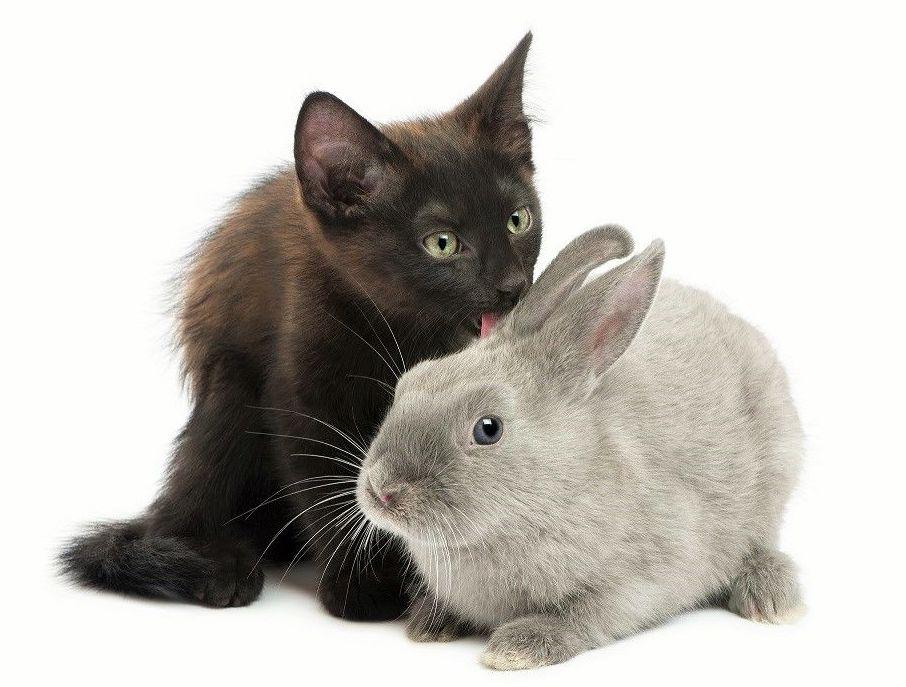 Peluquería felina y para roedores, productos para gatos y roedores