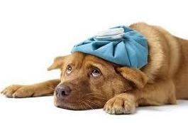 Servicios urgencias 24 horas: Servicios de SOS Animal Catycan