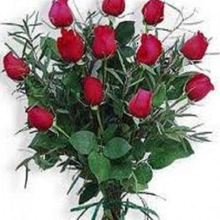 Rosa rojas pasión