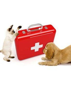 cuidados veterinarios para mascotas en Madrid, zona Hortaleza y Canillas