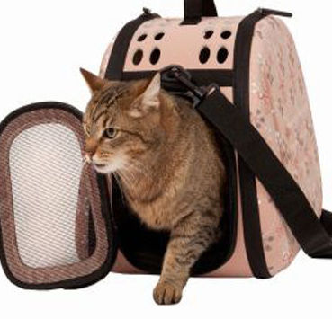 Llevar al gato al Centro Veterinario Argos Madrid Hortaleza Canillas