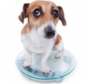 Veterinario perros Madrid Hortaleza Canillas