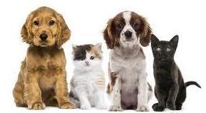 Clínica veterinaria Madrid Hortaleza Canillas