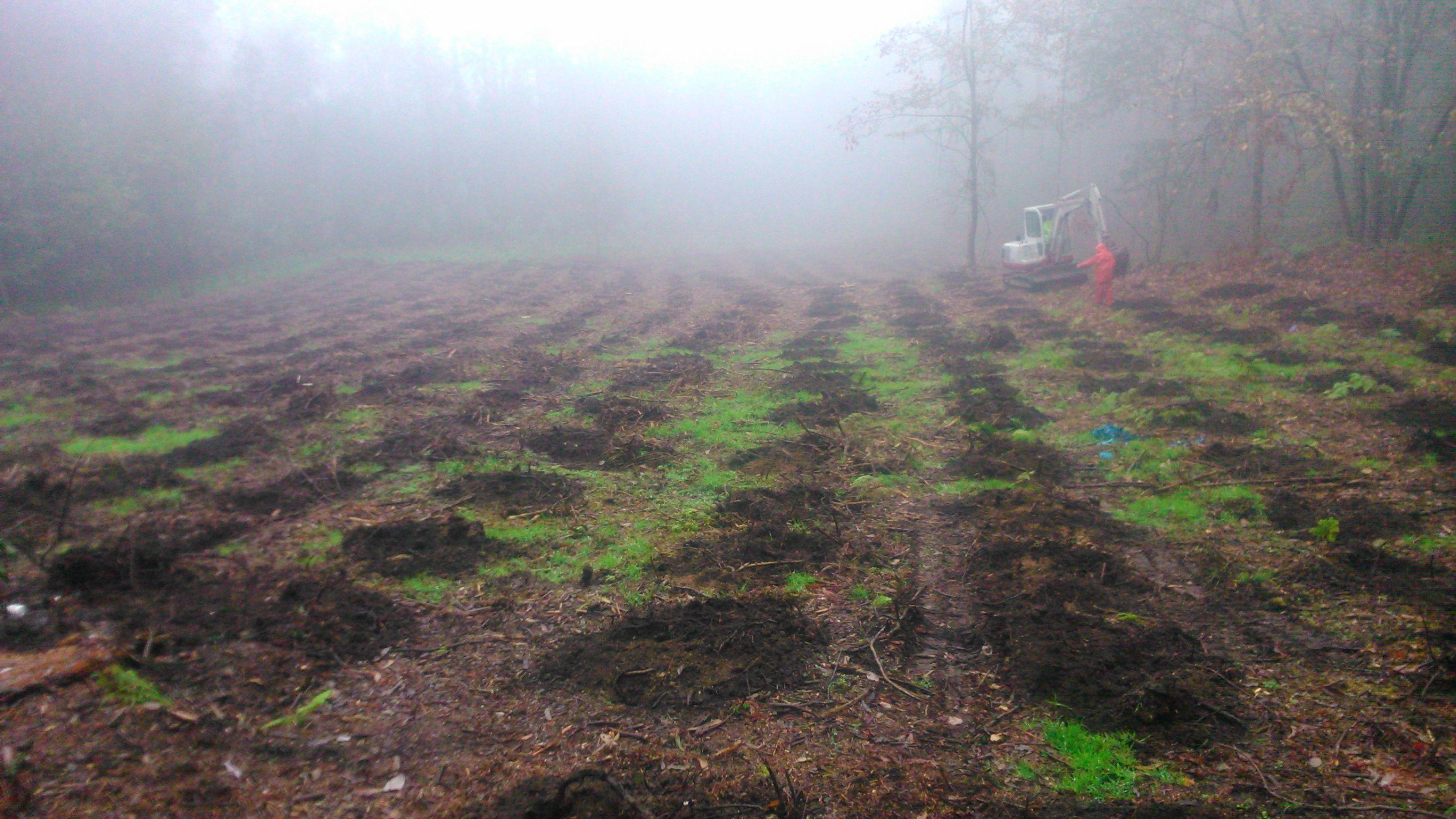 plantacion en Bueu