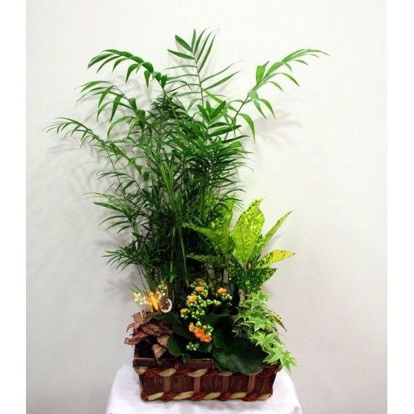 Africa - Conjunto de plantas: Productos de Entrefloresyplantas.es