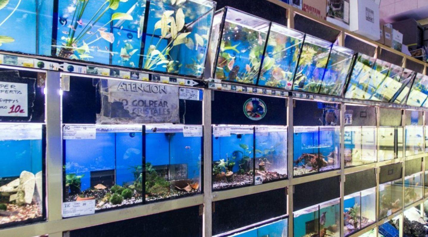 Foto 7 de tienda de animales en paterna zoolandia - El tiempo en paterna valencia ...