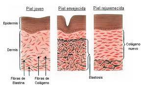 colageno piel