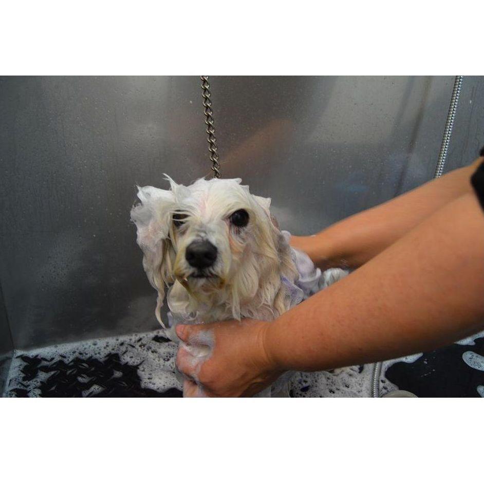 Peluquería canina: Especialidades de Clínica Veterinaria Reus