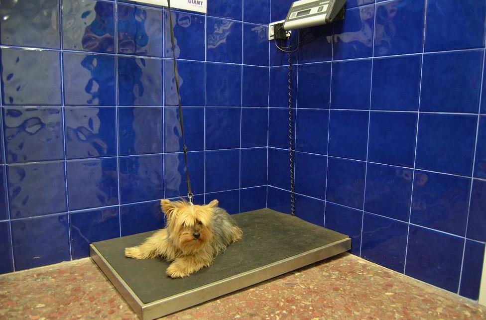 Vacunas y chips para mascotas