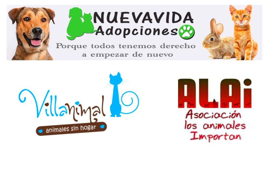 Educación de perros adoptados: Servicios de Adiestramiento canino NobleCan