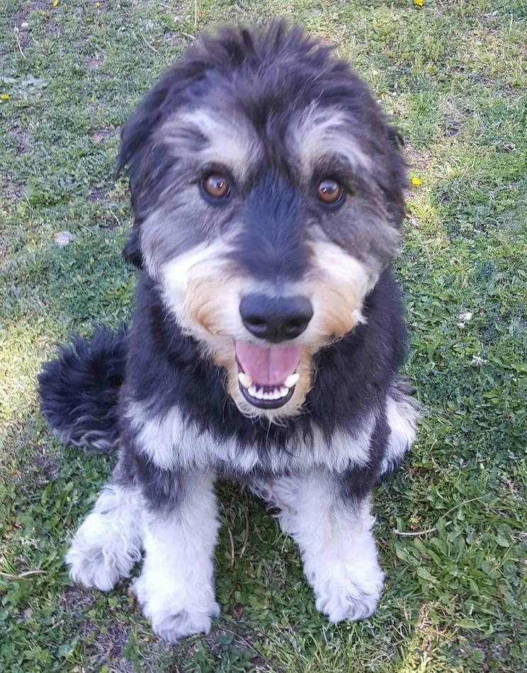 Adiestramiento de obediencia a domicilio: Servicios de Adiestramiento canino NobleCan