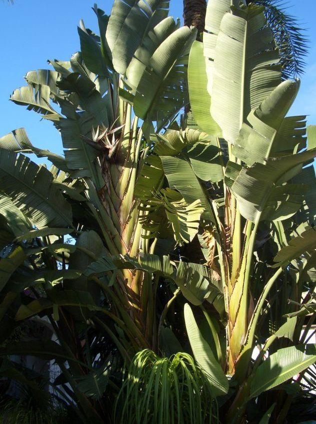 Plantas grandes para jardines